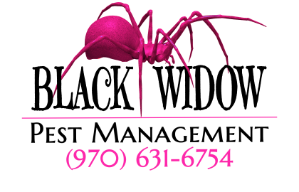 Black Widow Pest Management